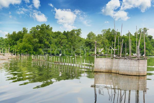 Cerca pescaria lago céu peixe natureza Foto stock © serg64