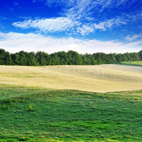 field and sky Stock photo © Serg64