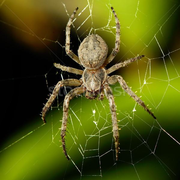 Groot spinnenweb textuur natuur kruis nacht Stockfoto © serg64