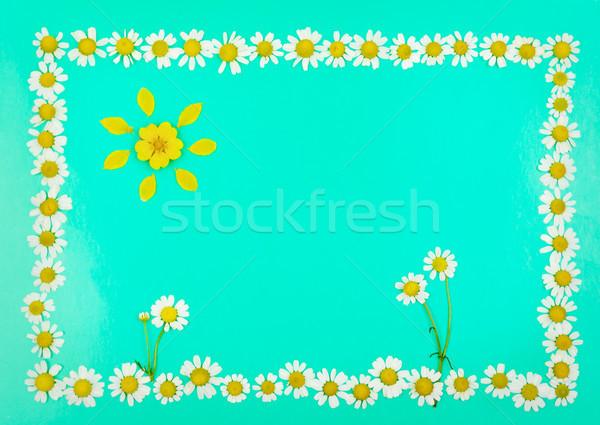 çerçeve çiçekler güneş papatyalar açık mavi üst Stok fotoğraf © serg64