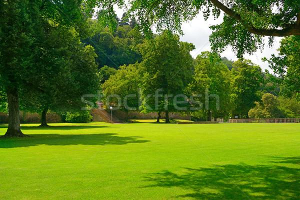 Güzel çayır park ağaç bulutlar çim Stok fotoğraf © serg64