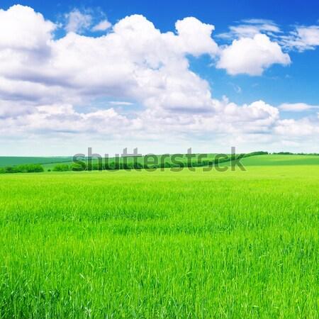 Veld hemel wolken gras zon groene Stockfoto © Serg64