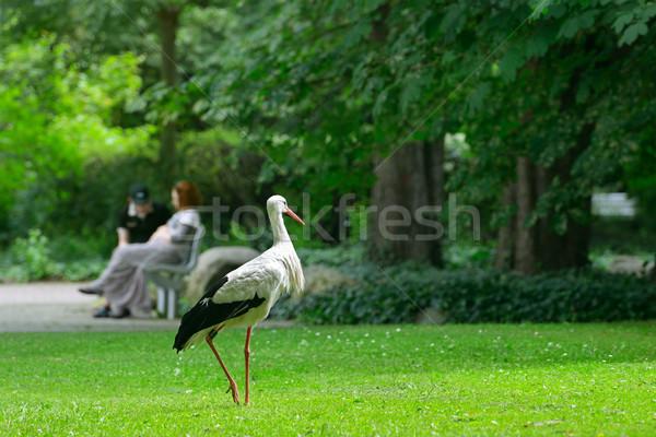 Storch grünen Gras Blume Körper Hintergrund Vogel Stock foto © serg64
