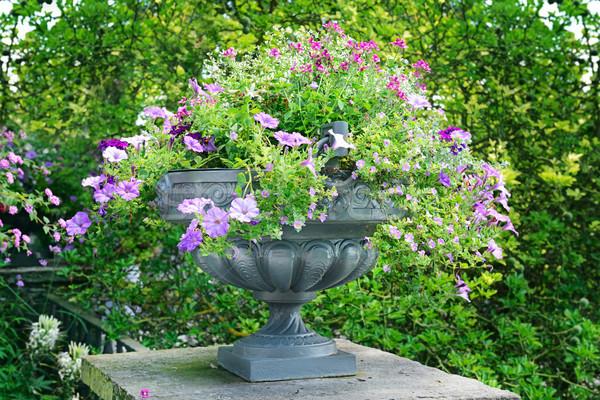 Lit de fleurs vase belle paysage beauté vert Photo stock © serg64