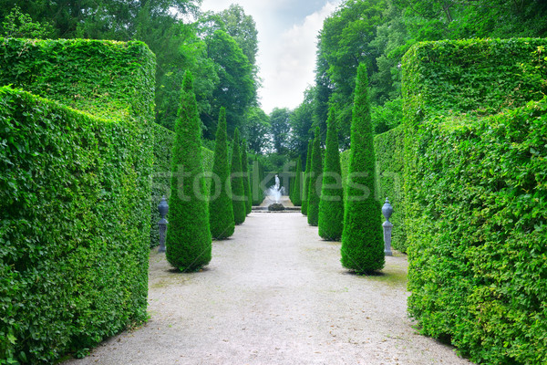 Beautiful alley in the park Stock photo © Serg64