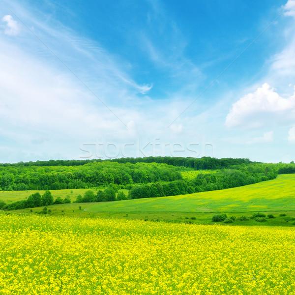 ストックフォト: フィールド · 青空 · 空 · 雲 · 草