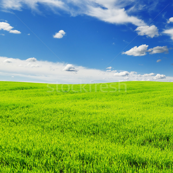 Weide gedekt hemel wolken gras zon Stockfoto © Serg64