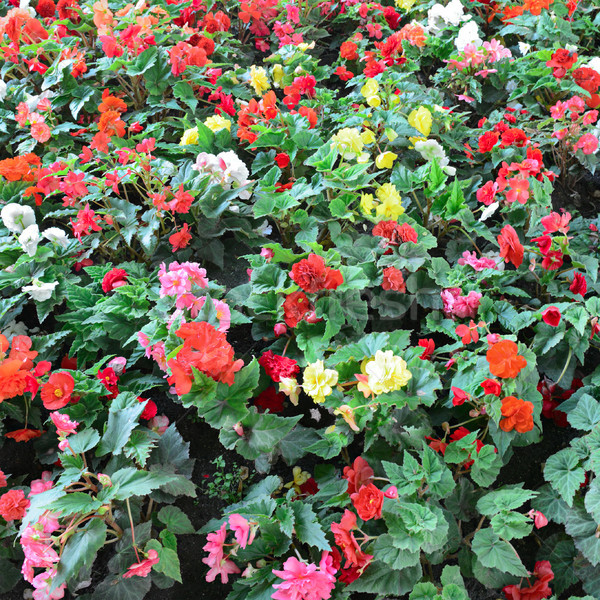Virágzó tavasz természet tájkép háttér nyár Stock fotó © serg64