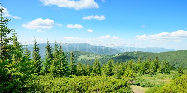 Montanhas coberto árvores blue sky céu árvore Foto stock © serg64