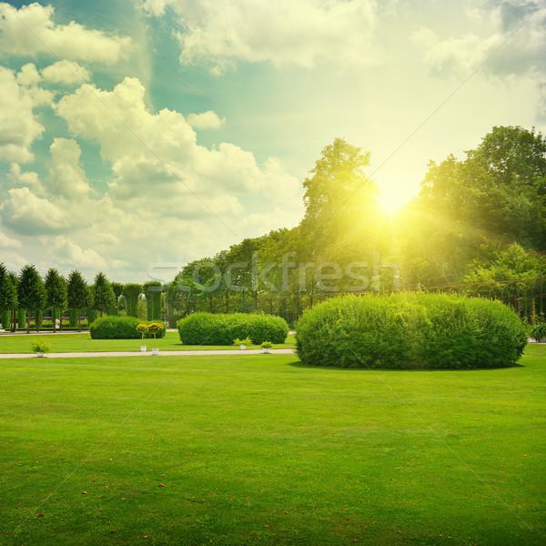 Gündoğumu güzel park çiçek bahar çim Stok fotoğraf © serg64