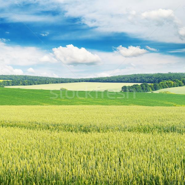Blauwe hemel wolken gras zomer ruimte Stockfoto © serg64