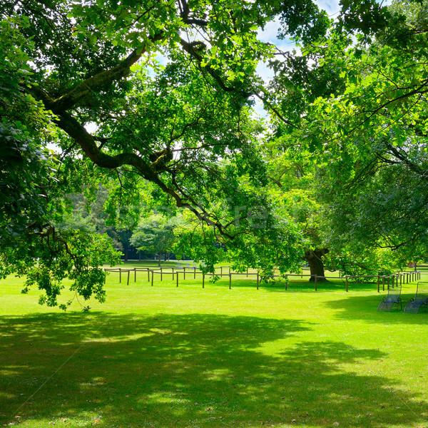 Gyönyörű legelő park fa nap természet Stock fotó © serg64