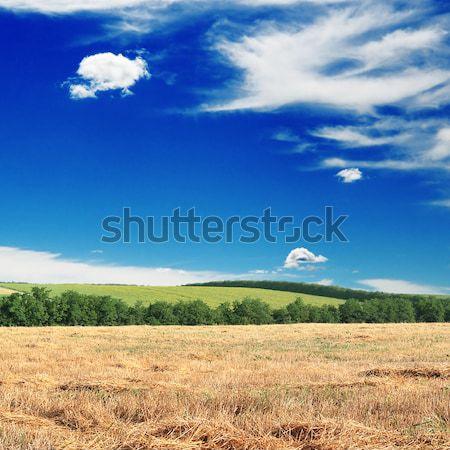 Mező égbolt tavasz fű nap zöld Stock fotó © Serg64