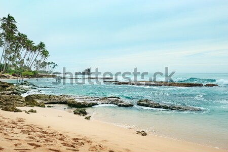 Korall óceán tengerpart égbolt fa természet Stock fotó © serg64