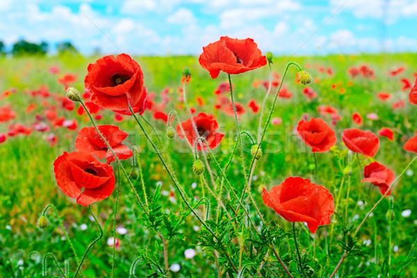 красный зеленый области небе цветок Сток-фото © serg64