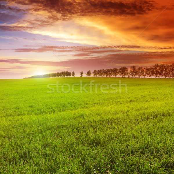 Gyönyörű naplemente tavasz mező égbolt virág Stock fotó © serg64