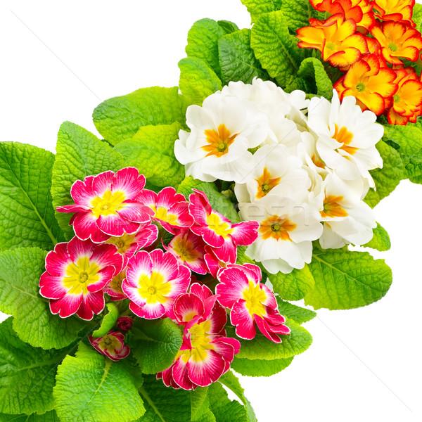 Kleurrijk vers geïsoleerd witte blad tuin Stockfoto © Serg64
