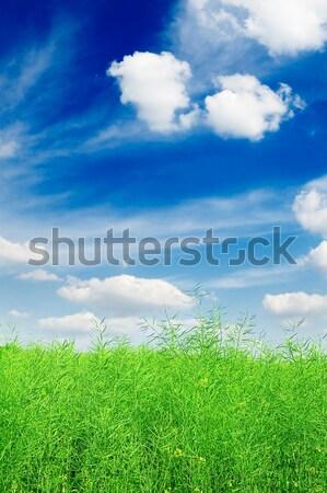 Weide voorjaar hemel wolken gras zon Stockfoto © Serg64
