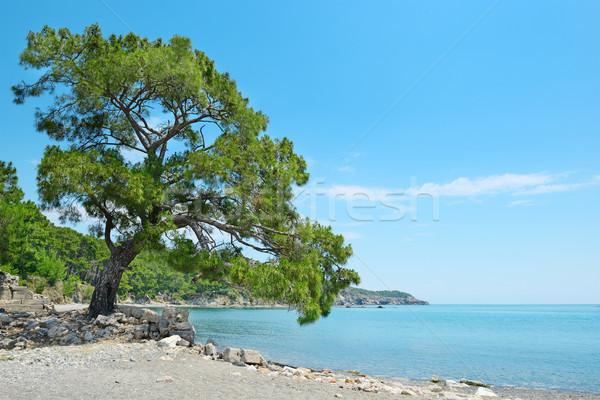 Big beautiful tree Stock photo © serg64