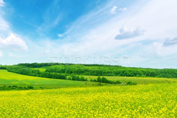 Violación campo cielo azul cielo nubes hierba Foto stock © Serg64