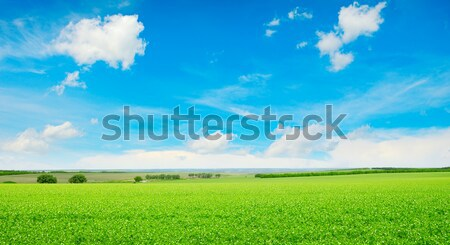 meadow Stock photo © Serg64