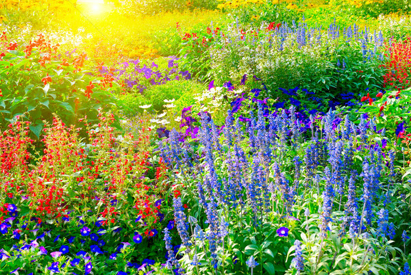 Színes virágágy megvilágított napfény virágmintás virág Stock fotó © serg64