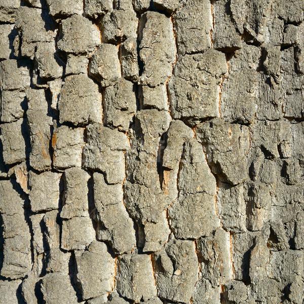 Oude boom schors houten textuur hout Stockfoto © serg64