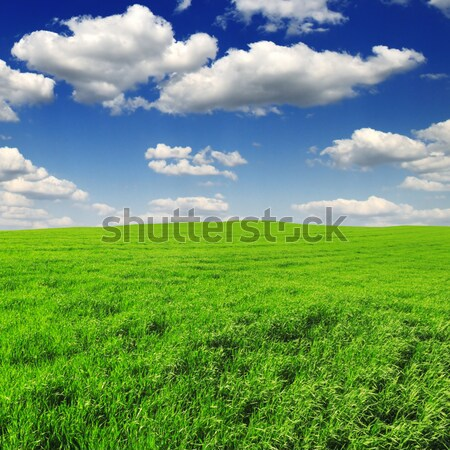 spring field Stock photo © Serg64