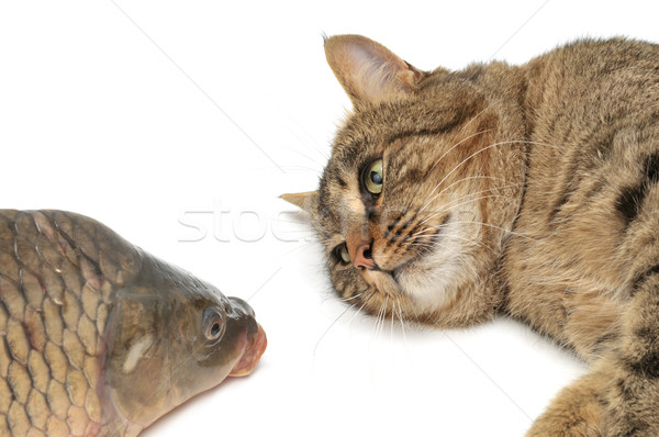 Stock photo: cat and fish