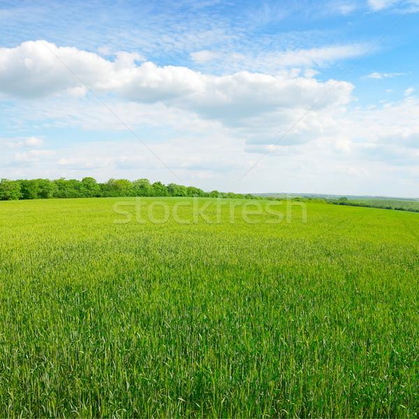 Voorjaar weide blauwe hemel zon achtergrond groene Stockfoto © serg64