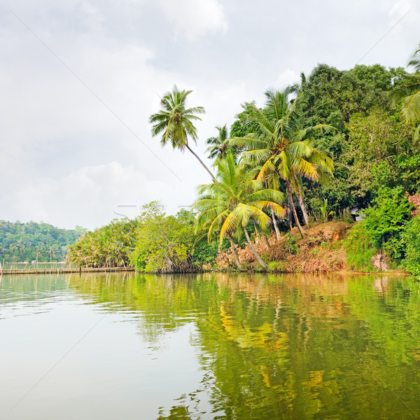 Tropical jungle on the lake Stock photo © serg64