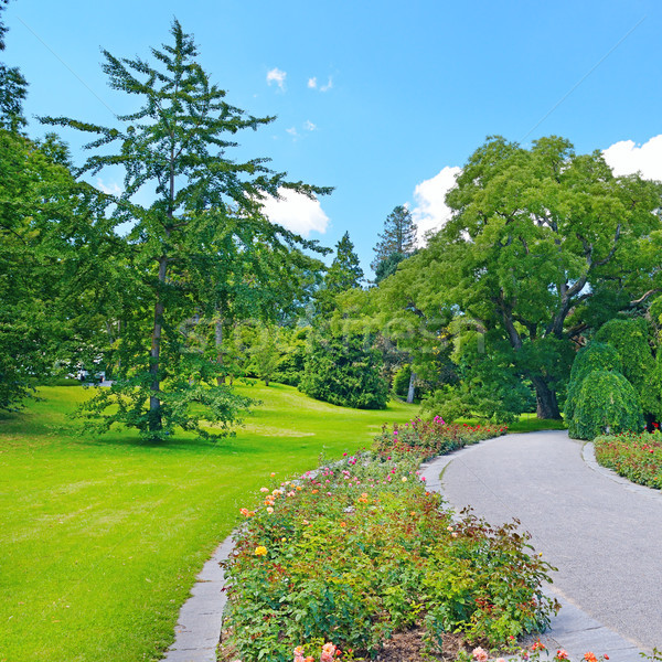 Footpath in a summer park Stock photo © serg64