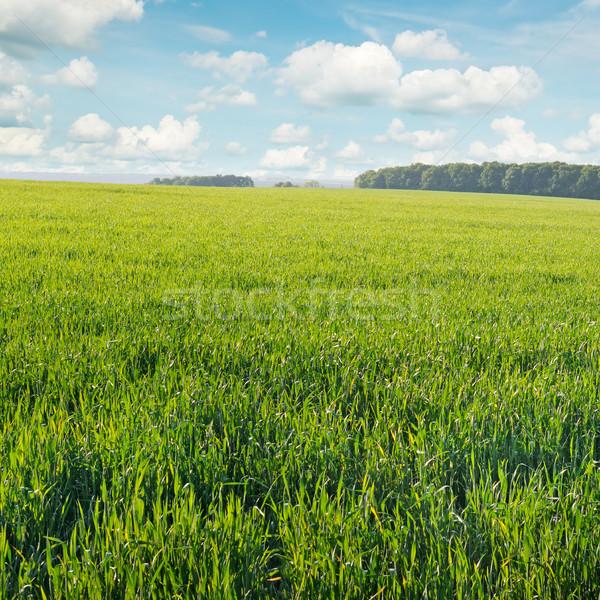 Tavasz legelő kék ég nap természet nyár Stock fotó © serg64