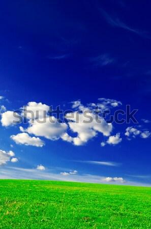 field Stock photo © Serg64