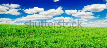 fields Stock photo © Serg64