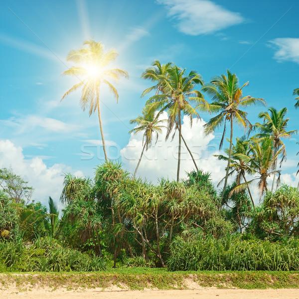 Coconut palms lit bright sun Stock photo © serg64