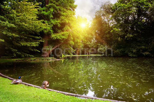 Dawn over small lake in woods Stock photo © serg64