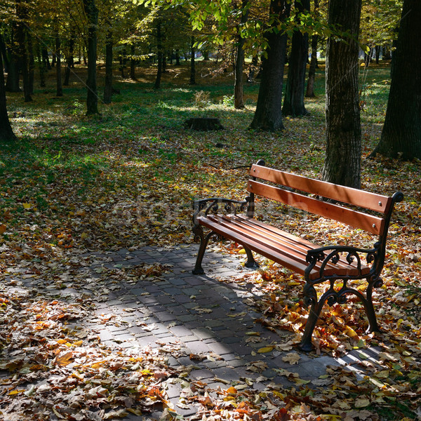 wooden bench in the park in the sunlight Stock photo © serg64