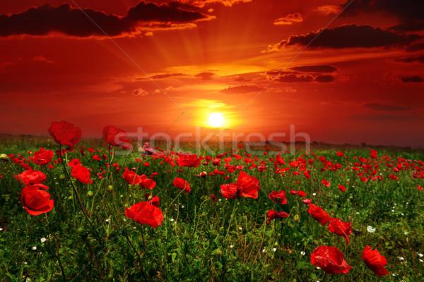 Fényes napfelkelte pipacs mező égbolt virág Stock fotó © Serg64