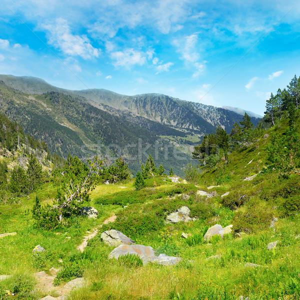 Pintoresco valle alto montanas Andorra flor Foto stock © Serg64