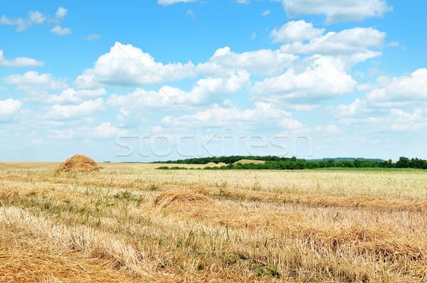 Récolte nuages printemps paysage domaine Photo stock © serg64