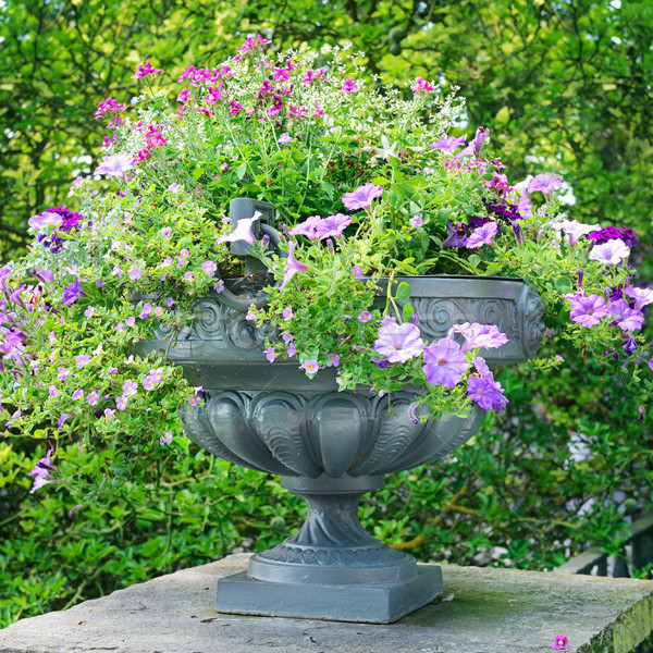 美しい 花壇 花瓶 風景 美 緑 ストックフォト © serg64