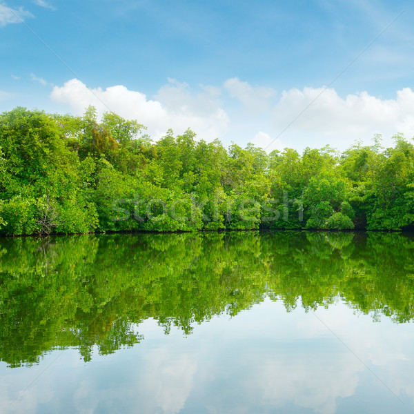 Mangroves and blue sky Stock photo © serg64