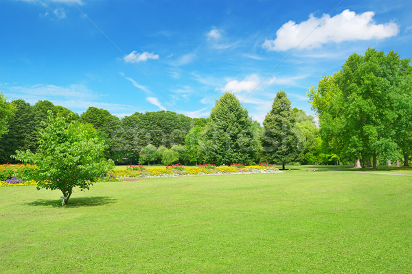 Beautiful meadow in the park Stock photo © serg64