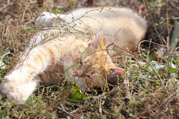 cat Stock photo © Serg64