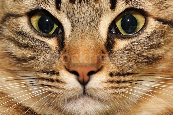 Gato doméstico mano ojo naturaleza fondo diversión Foto stock © Serg64