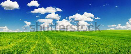 Mező égbolt felhők fű nyár zöld Stock fotó © Serg64