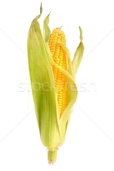 corn on the cob  Stock photo © serg64