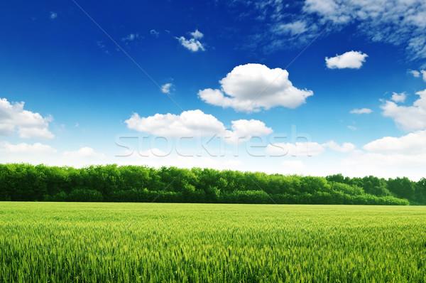 Blauwe hemel boom wolken voorjaar gras Stockfoto © Serg64