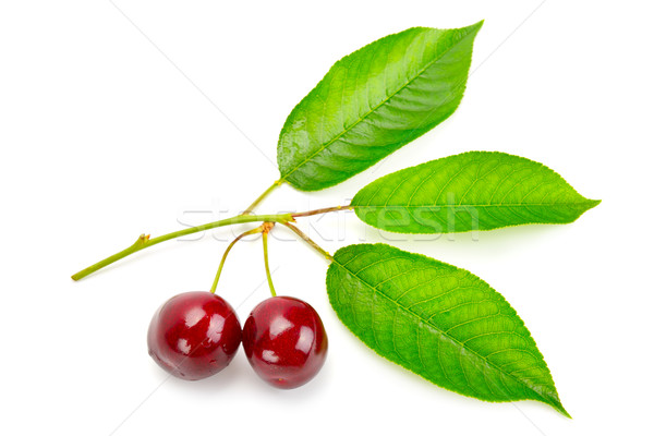 Vruchten zoete kers vers bladeren geïsoleerd Stockfoto © Serg64